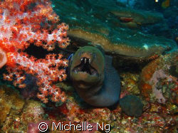 I didn't know moray eel has another row of teeth in the c... by Michelle Ng