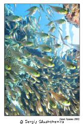 Glases fishes by Sergiy Glushchenko