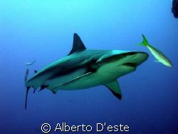 Green shark in Jardines de la Rejna by Alberto D'este