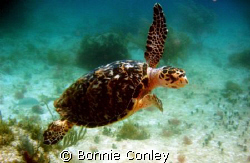 I was fortunate to see several turtles on my trip to the ... by Bonnie Conley
