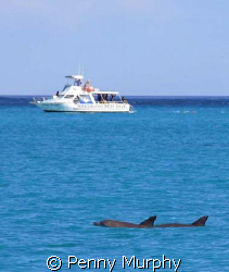 Local dive boat and dolphins by Penny Murphy