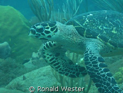 Taken with Canon G9 off the coast of NW Puerto Rico by Ronald Wester