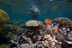My wife snorkeling with clown fish on the Qamea reef in F... by Michael Shope