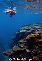 Susan snorkeling on Horse Shoe reef. by Michael Shope