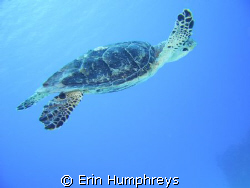 This was my first attempt at underwater photography and i... by Erin Humphreys