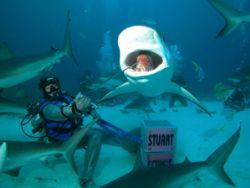 Shark Bite Shot, Nassau Bahamas. Taken with the CP 5000. ... by Nina Van Zanten