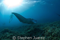 Maui Mantas come in to a cleaning station late afternoon by Stephen Juarez
