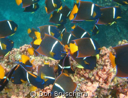 Shot this in the Galapagos near the surface. Didn't expec... by Don Bruschera