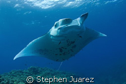 Manta cleaning station Maui, Nikon D200 ,10-17mm Tokina, ... by Stephen Juarez