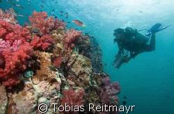 Christine, video hunting on Shark Point Phuket, between P... by Tobias Reitmayr