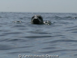 My Friend - Farne Islands 2008 - Coolpix 5400 - Sea & Sea... by Kevin Hewitt-Devine