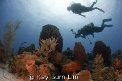 Photographer, buddy and reef, D300, 10.5mm Fisheye by Kay Burn Lim