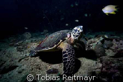 Hawksbill Turtle wondering, Bida Nok, Canon EOS 350d 10-22mm by Tobias Reitmayr