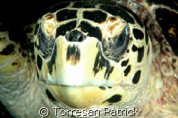 green turtle by Torresan Patrick