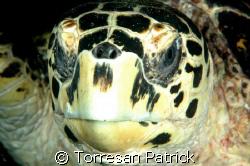 green turtle by Torresan Patrick