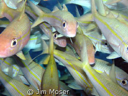 I think the fish were more curious with me as I was about... by Jim Moser