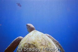 This was a snap it 35mm $14 camera.  A turtle checking ou... by Bradley Mihelich