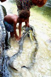 Hand feeding fresh water eels; NIP, PNG;  Nikon F. 28-300... by Rick Tegeler