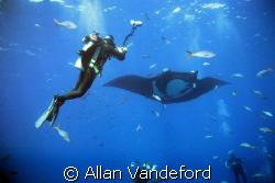 Image taken at San Benedicto Island in the Revillagigedos... by Allan Vandeford
