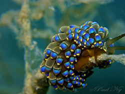 Resting on fire coral. Taken with Canon G9 with Inon stro... by Paul Ng