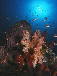 Reef scene, Tulamben by Doug Anderson