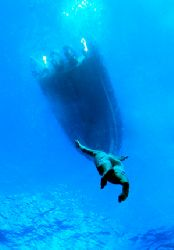 Free-diver, Mozambique.The skipper came down to  30 m wit... by Claudia Pellarini