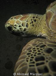 Turtle at Crash Boat, night  dive, Aguadilla, P.R. by Abimael Márquez