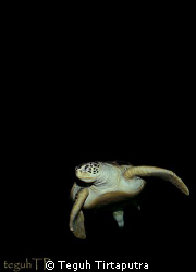 A sea turtle...Canon EOS 400D with a Tokina 10-177mm wide... by Teguh Tirtaputra