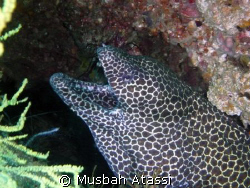 Eel shot with Panasonic DMC-TZ3 whith flash, no strobes. by Musbah Atassi