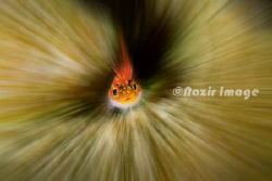 Manupulated by add Zoom burst effect.  by Nazir Amin