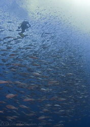 Fish soup. Darwin island. Galapagos. S5 PRO, 10.5mm. by Derek Haslam