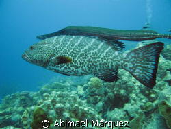 The Two Amigos, Angel City, dive site, Bonaire. by Abimael Márquez