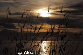 Grassy sillohuete against sunset of the South China Sea by Alex Lim