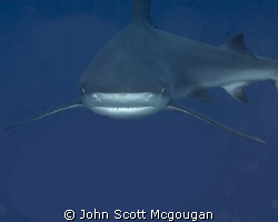 This reef shark turned right into me as I was releasing t... by John Scott Mcgougan