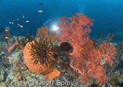 reeflife of Raja Ampat by Geoff Spiby