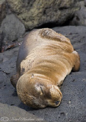 It's a hard life! Galapagos. S5 PRO. 18-200mm. by Derek Haslam