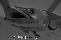 Big teeth rule /