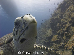 Very friendly turtle. Was practicing wide-angle natural l... by Susan Lunn