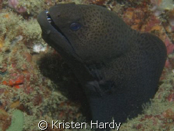 moray madness! by Kristen Hardy
