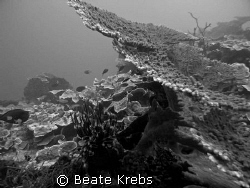 Reef in black and white, Canon S70  by Beate Krebs