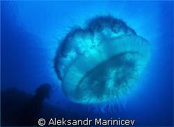 Jelly fish on East Tangat Wreck, Coron Bay by Aleksandr Marinicev