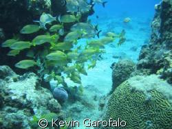 Cozumel 6/08 taken in submersible B.O.B with 3.2 megapixe... by Kevin Garofalo