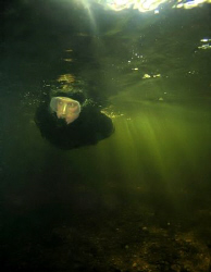Snorkeling and diving in river Kamenice in the northern B... by Alena Vorackova