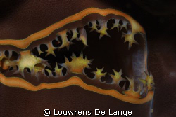 Another clam mouth by Louwrens De Lange
