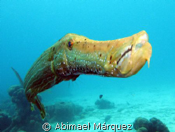Trumpetfish, Something Special, Bonaire by Abimael Márquez