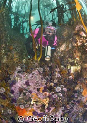 exploring the kelp forests of Cape Town by Geoff Spiby