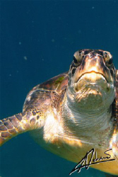 this turtle is always up for pictures! Every trip to Simi... by Adriano Trapani