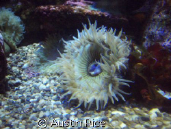 Took at the Aquarium of the Pacific. Just used the bare O... by Austin Rice