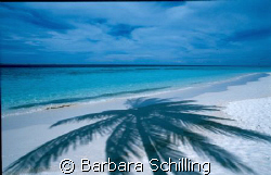 Shadow of a Palm Tree by Barbara Schilling