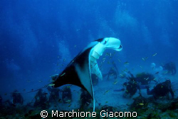 Big manta and scubas under the its wings Maldives 2007 ... by Marchione Giacomo